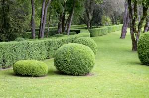 taille de haie, espace vert, jardin, tonte