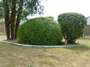 Taille de haies, arbustes